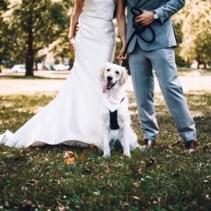 Zwierzęta na ślubie i weselu